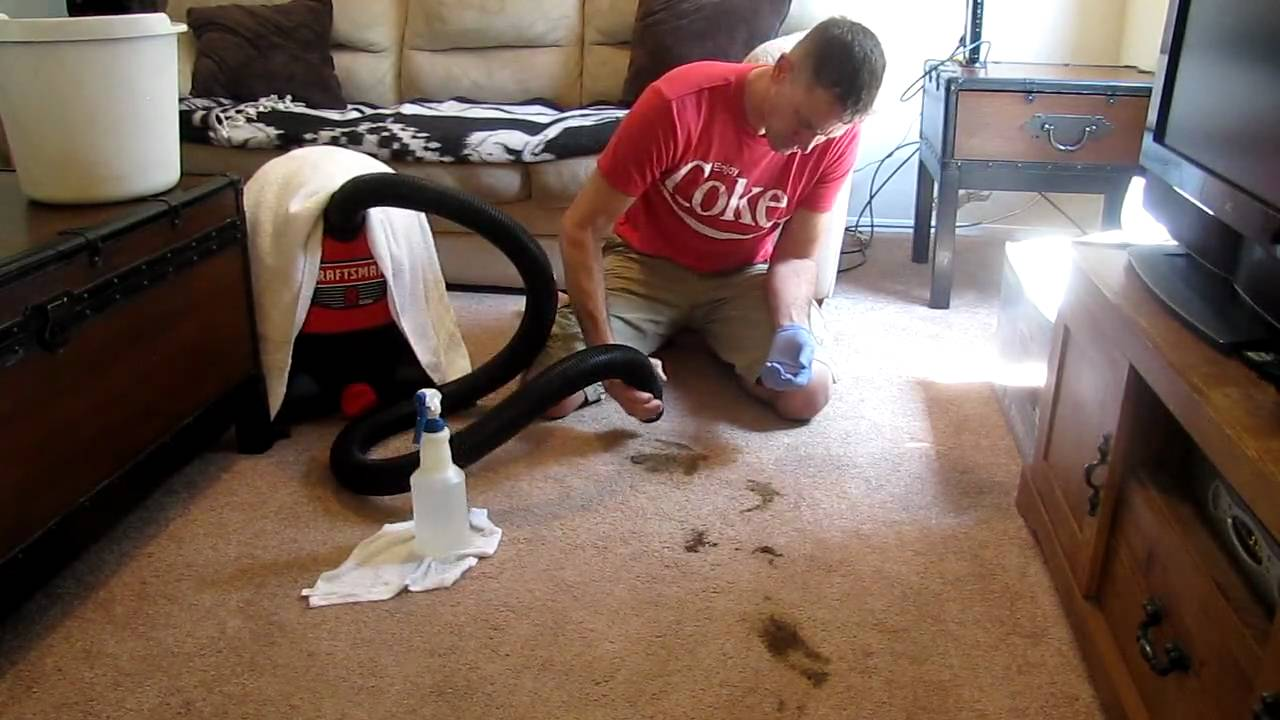 How To Clean Dog Diarrhea Stains From Carpet HomeEverydayentropycom