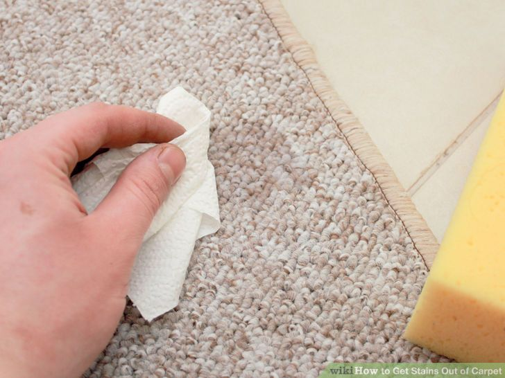 Best Way To Clean Dog Poop Out Of Carpet